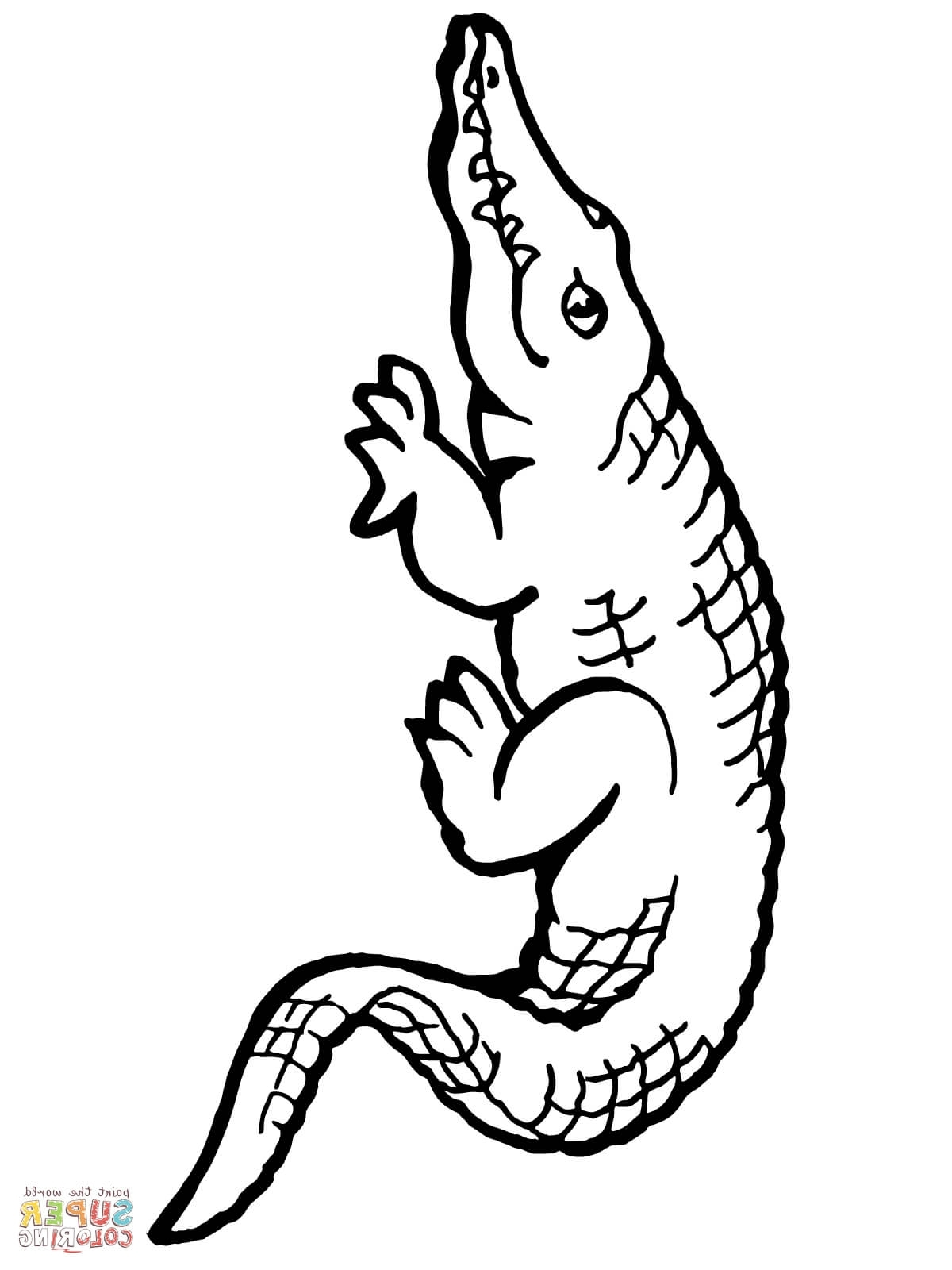 American Alligator Drawing at GetDrawings.com | Free for personal ...