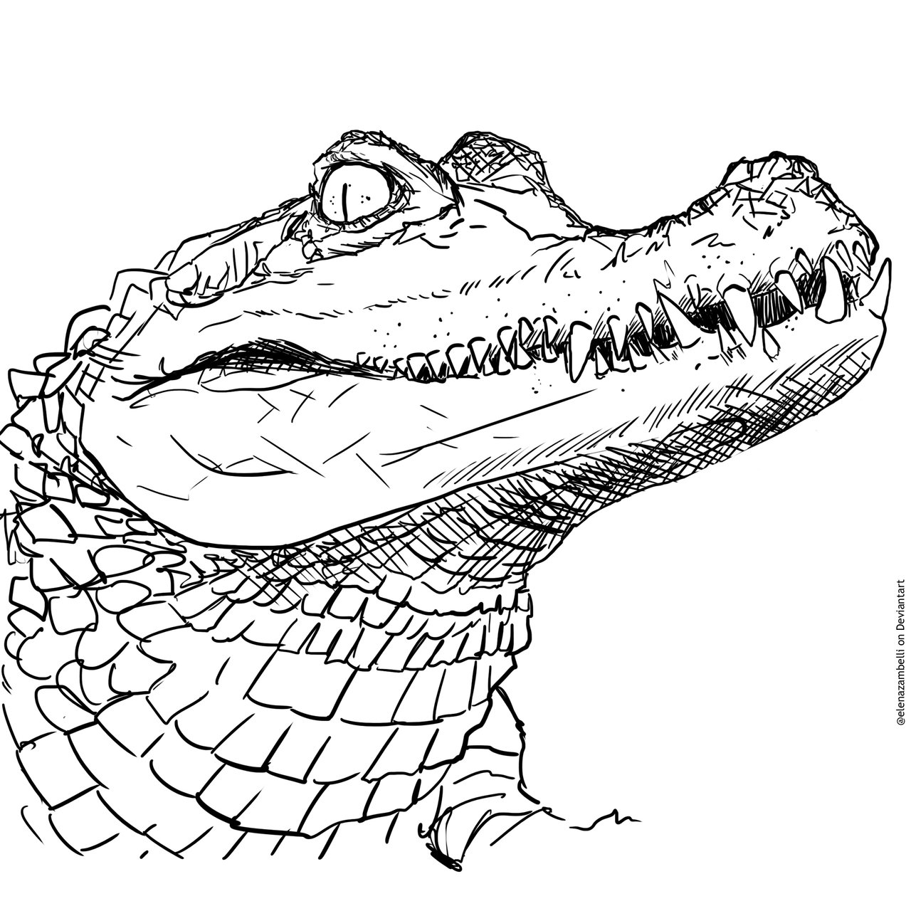 1280x1280 Spectacled Caiman Drawing By Elenazambelli