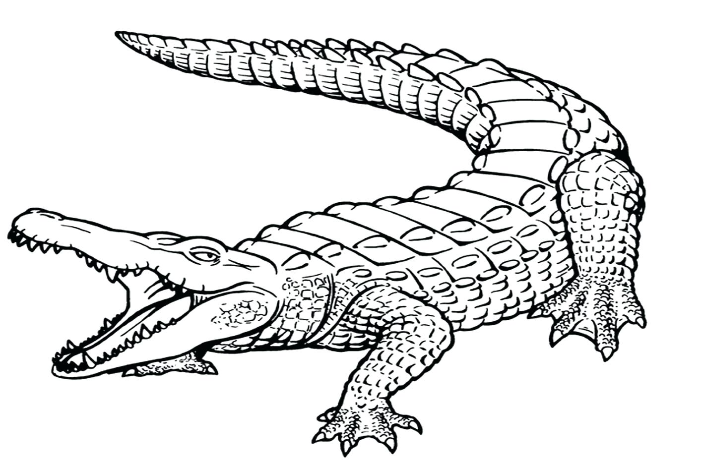 1417x944 Coloring Coloring Page Alligator Baby Alligators Pages Free