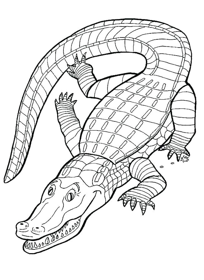 653x897 Alligator Coloring Alligator Coloring Pages American Alligator