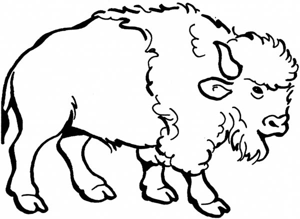 600x438 Awesome Drawing Of A Bison Coloring Page Color Luna