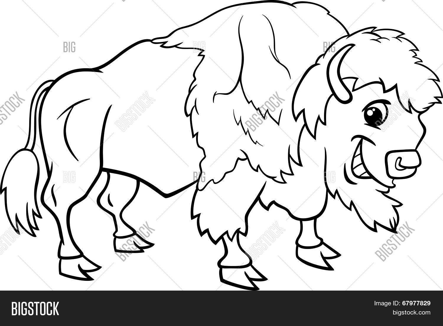 1500x1104 Bison American Buffalo Coloring Vector Amp Photo Bigstock