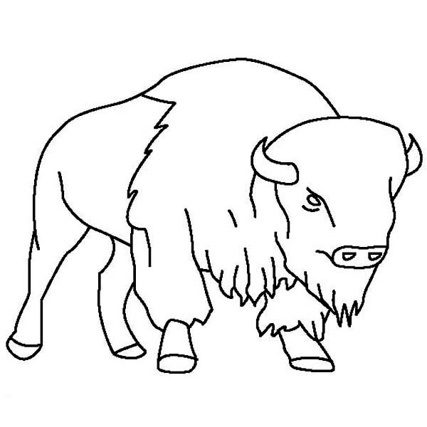 600x600 Bison Outline Coloring Page Color Luna