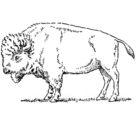 450x405 Drawing Buffalo