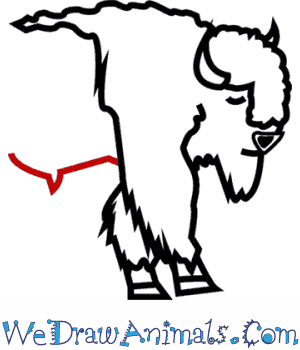 300x350 How To Draw An American Bison