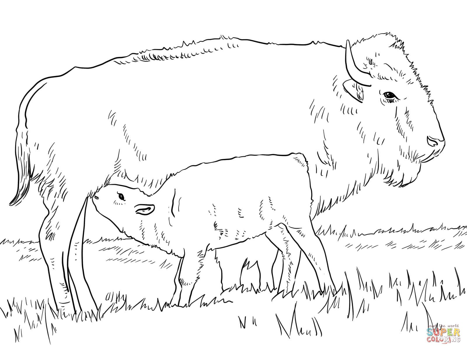 1600x1200 Bison Animal Name In Hindi Free Draw To Color
