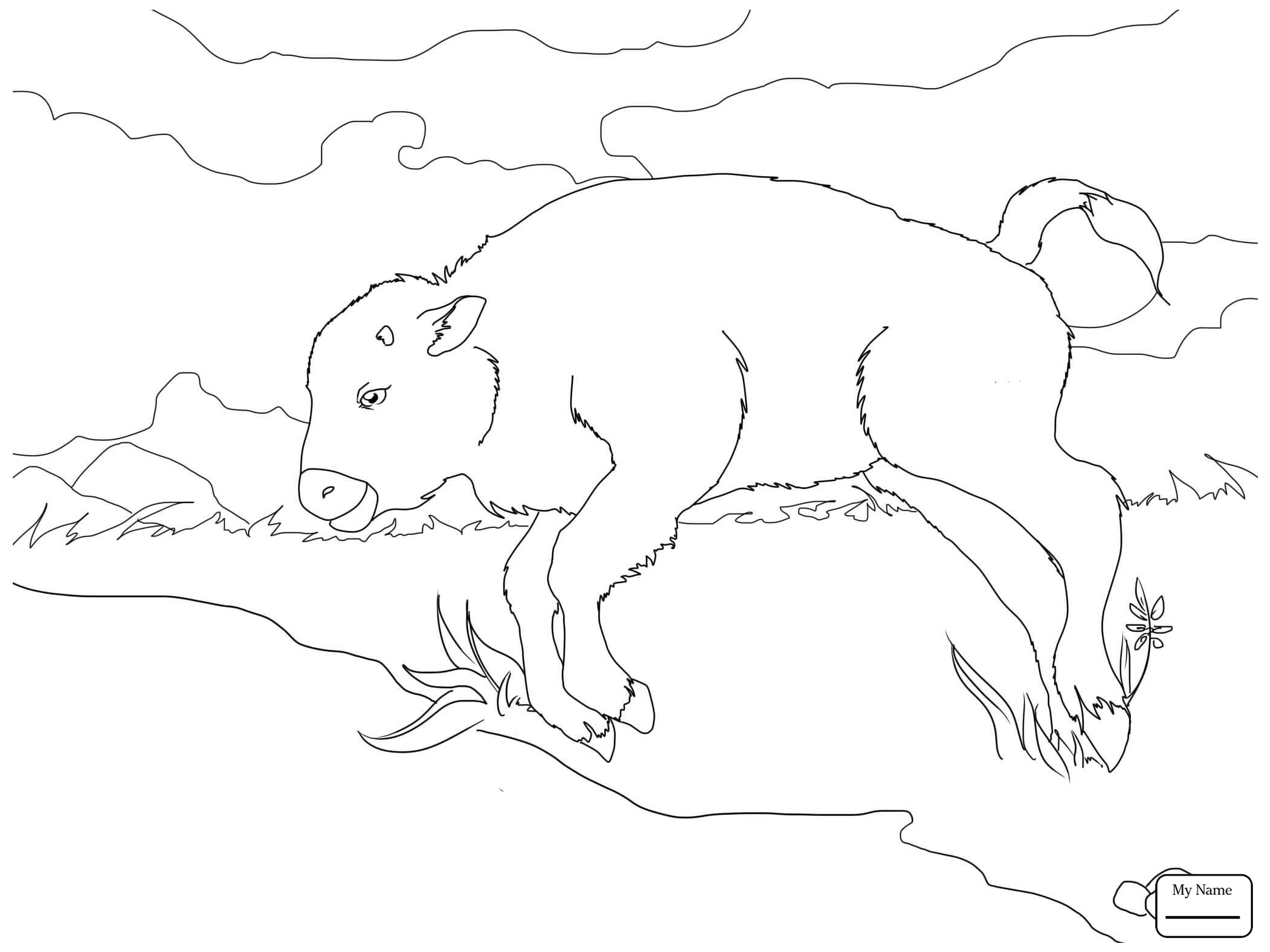 2089x1567 Coloring Pages American Bison With Calve Mammals Buffalo
