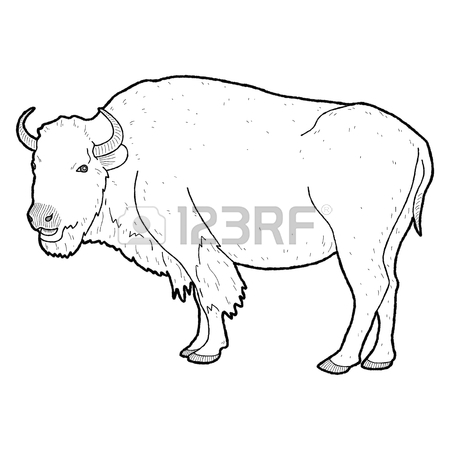 450x450 American Buffalo Animal Cartoon Art Stock Photo, Picture