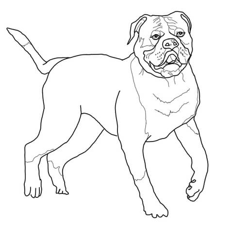 480x467 American Bulldog Coloring Page Free Printable Coloring Pages