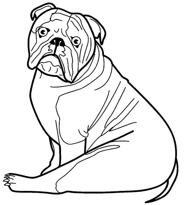 600x668 Bulldog Coloring Pages