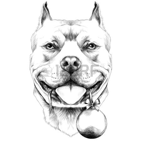 450x450 Dog Breed American Bulldog Head Sketch Vector Graphics Black