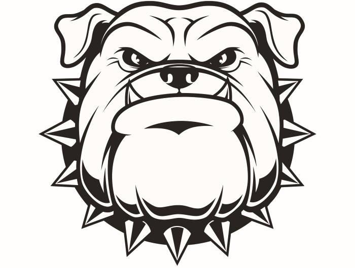 700x530 English Bulldog 5 American Mascot Head Spiked Collar Dog