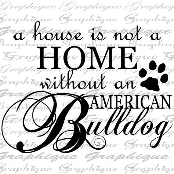 570x570 43 Best American Bulldogs Images On Friends, Puppies
