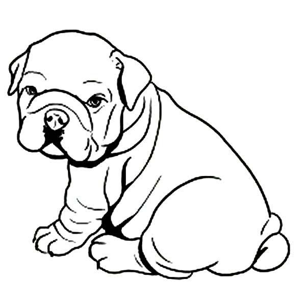 American Bulldog Drawing At Getdrawings Com Free For