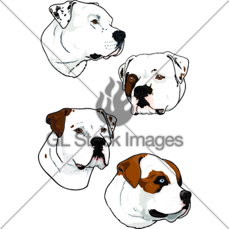 325x325 American Bulldog Standard Gl Stock Images