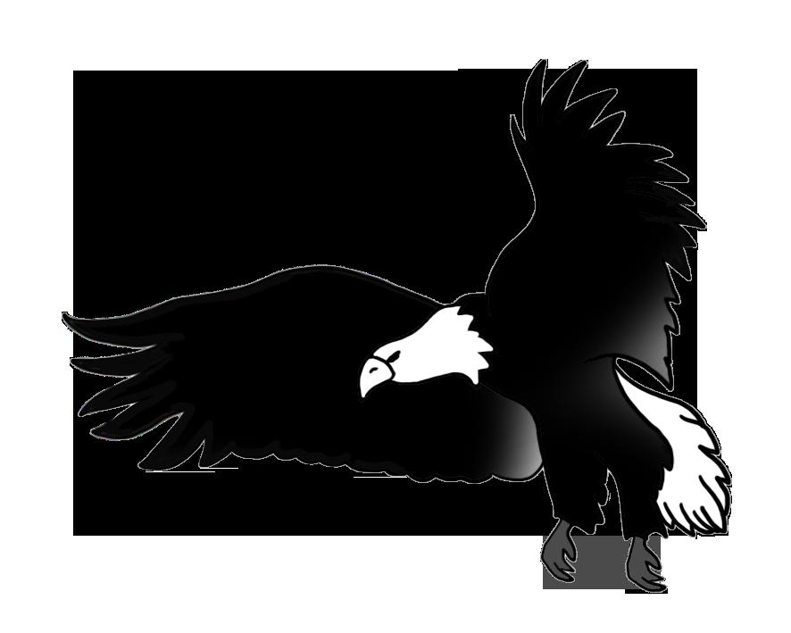 886x709 Bald Eagle Drawings