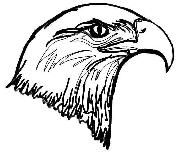 600x524 Bald Eagle Head Coloring Page Coloring Sun