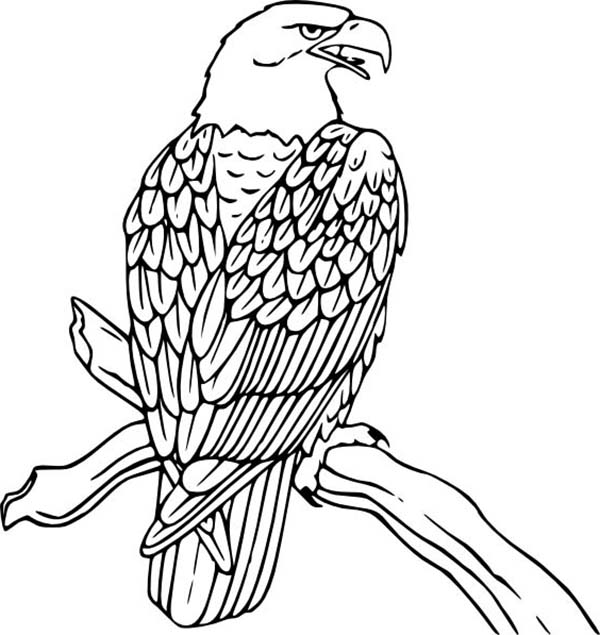 600x635 Bald Eagle Rest On Tree Coloring Page