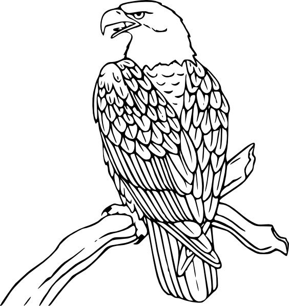 564x597 Bald Eagle Clip Art Free Vector In Open Office Drawing Svg ( Svg