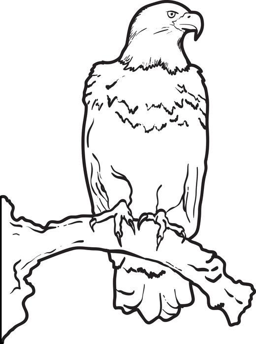 520x700 Drawn Bald Eagle Veterans Day