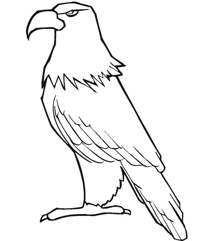 Bald Eagle With Smooth Feather Coloring Page 700x783 Template