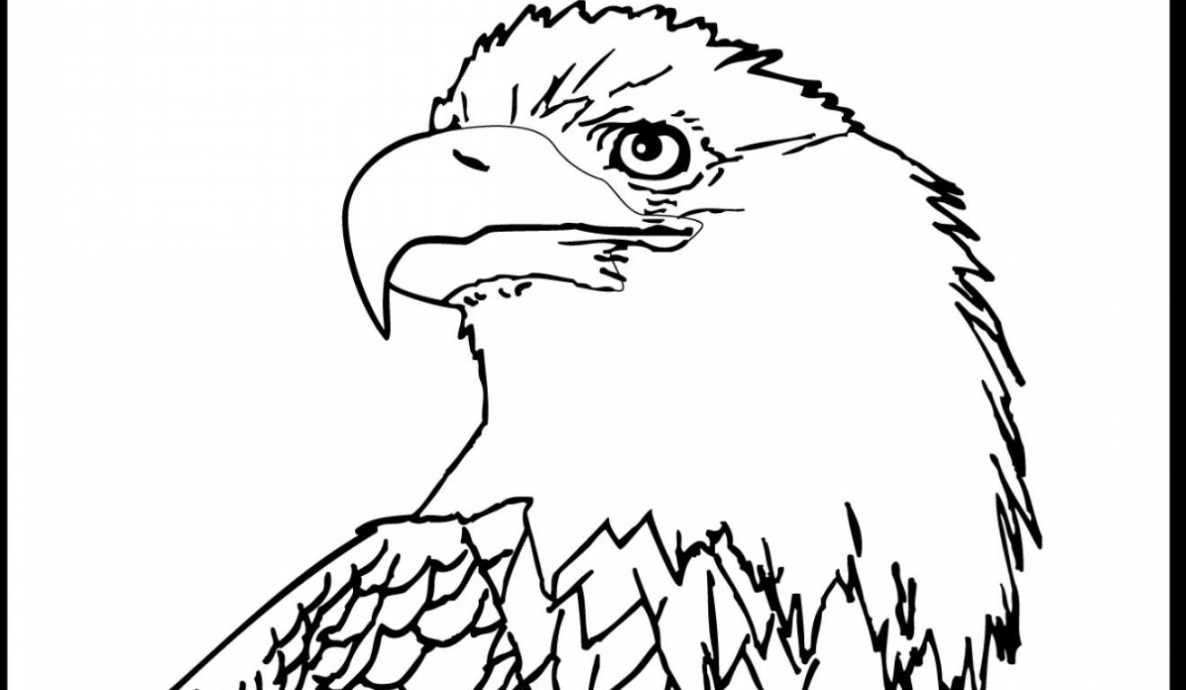 1320x768 American Bald Eagle Coloring Page Free Printable Birds Pages