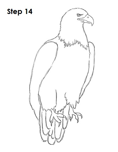 386x500 How To Draw An Eagle (Bald)
