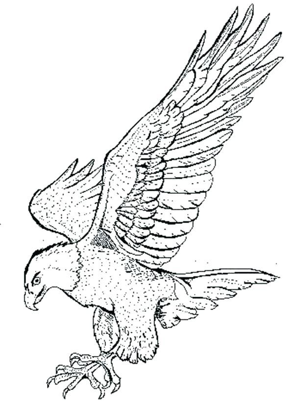 600x842 Eagle Color Page
