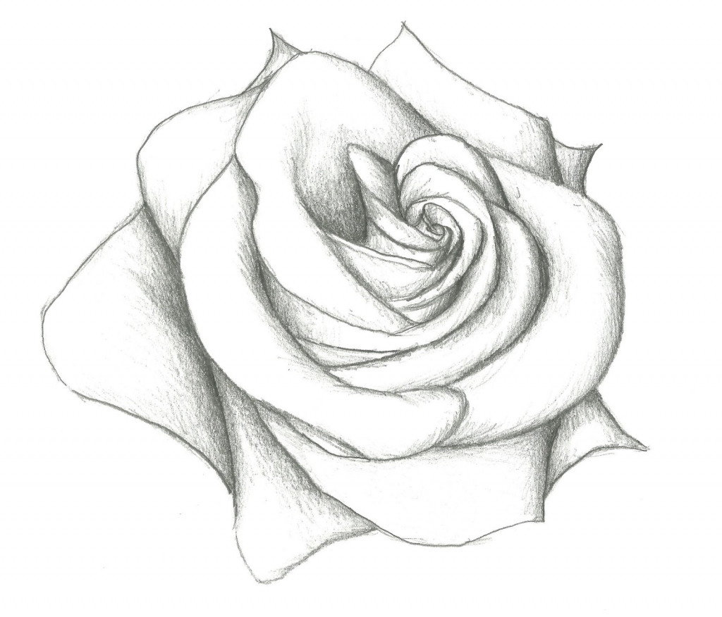1024x876 How To Draw A Rose In Pencil Draw A Realistic Rose Step By Step