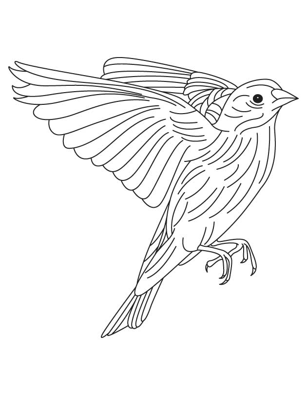 630x810 American Goldfinch Coloring Page Download Free