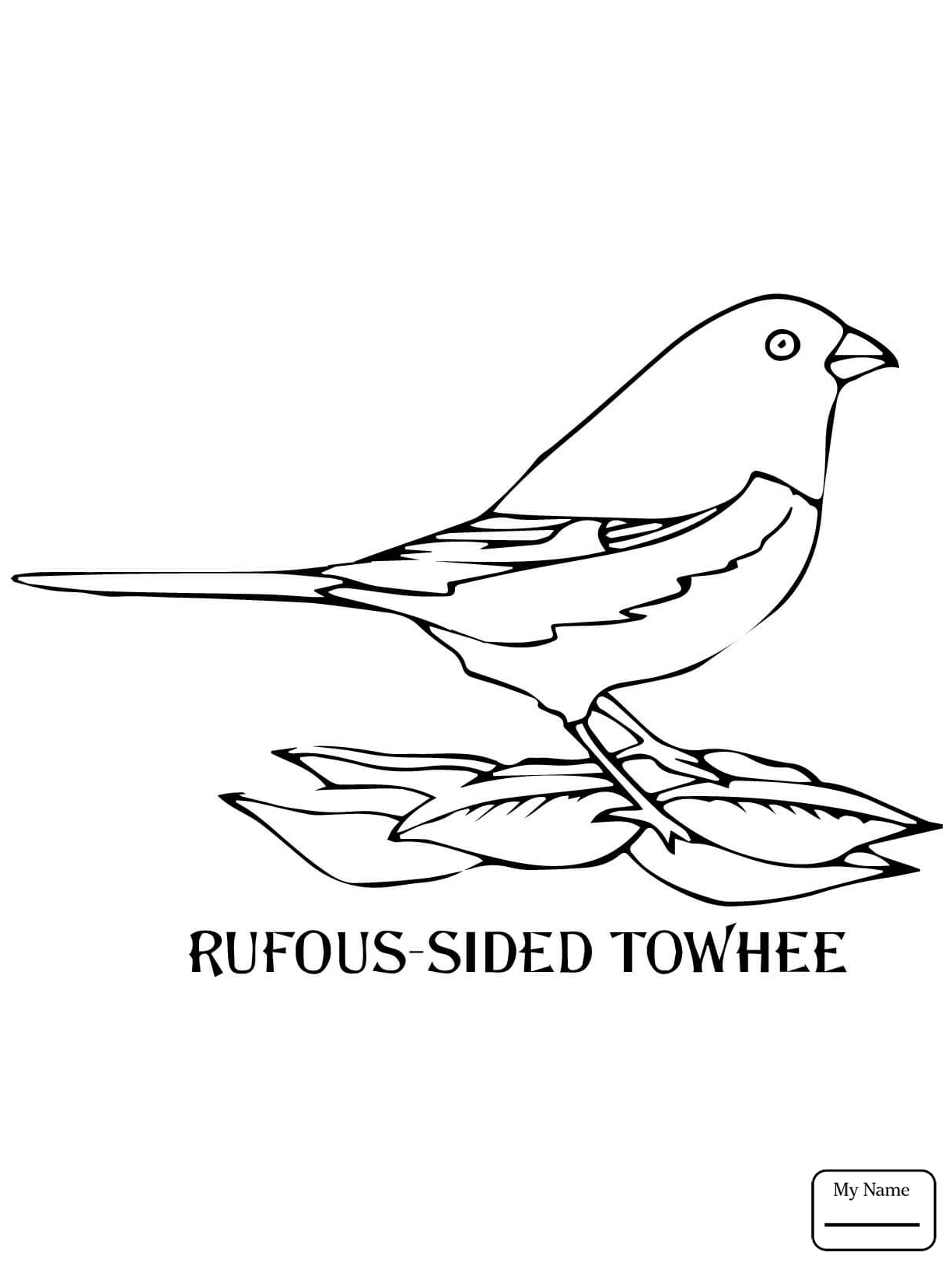 1224x1632 Eastern Goldfinch Pics To Coloring Page