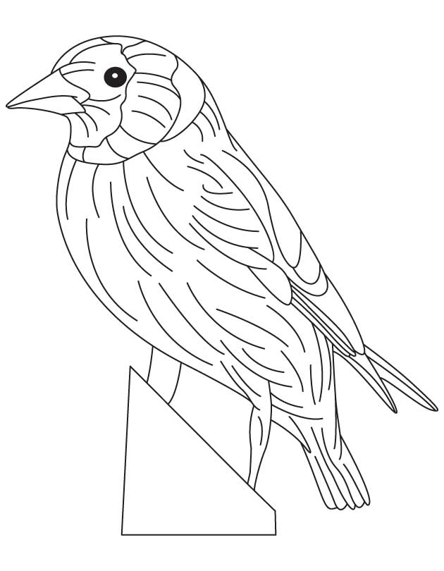 630x810 Eastern Goldfinch Coloring Page Download Free