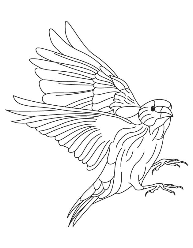 630x810 European Goldfinch Coloring Page Download Free