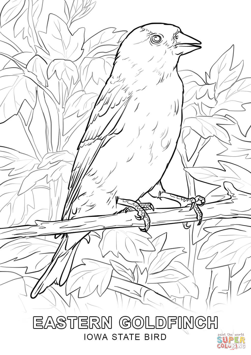 1020x1440 Iowa State Bird Coloring Page Free Printable Pages
