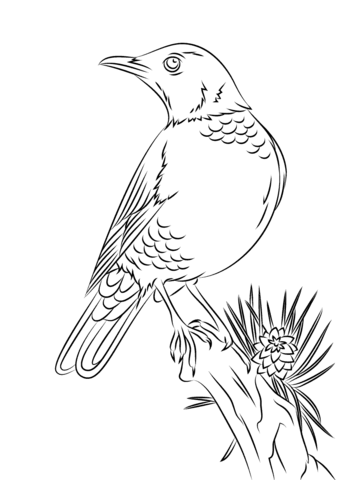 358x480 Perched American Robin Coloring Page Free Printable Pages