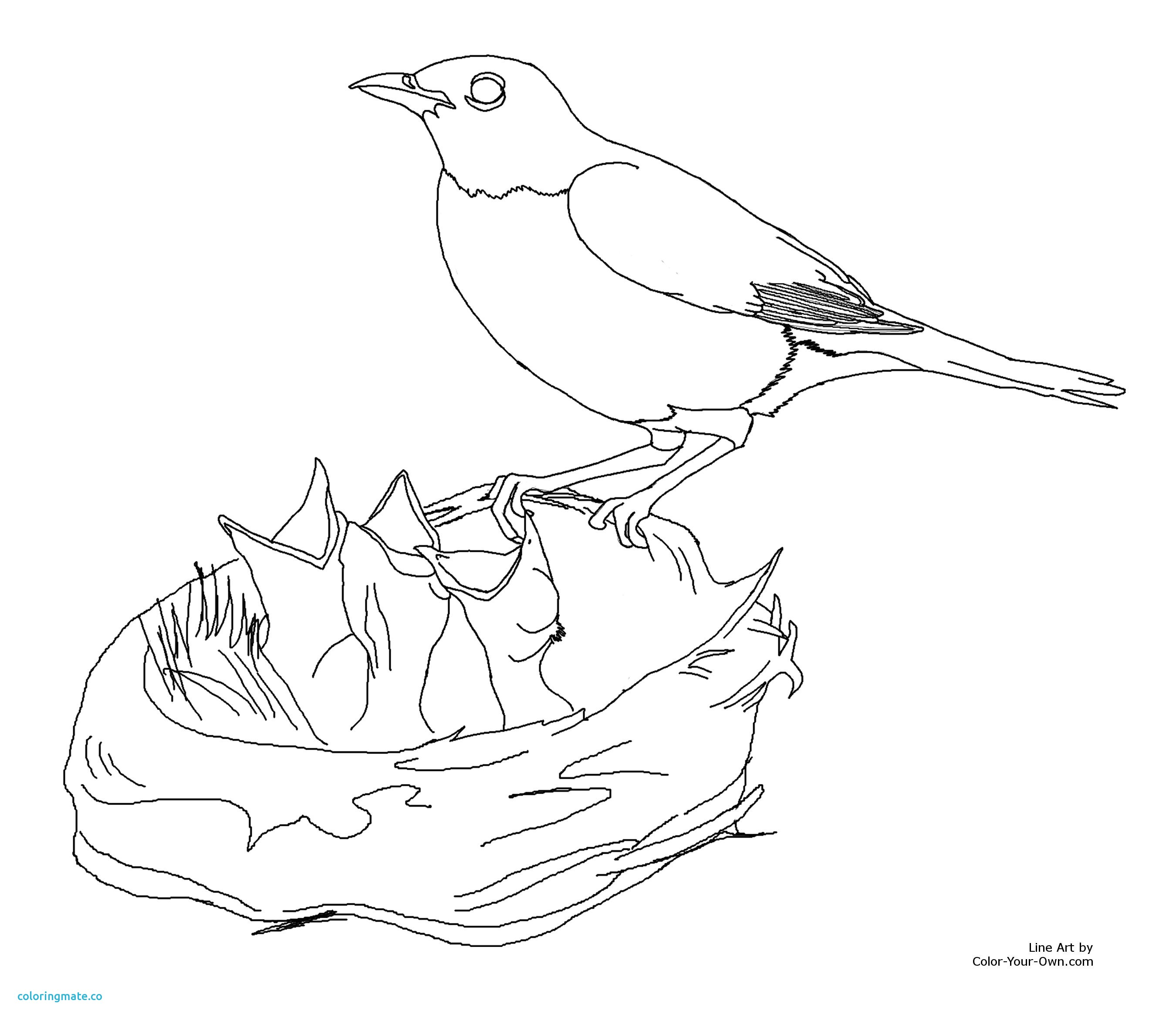 2700x2344 Printable Coloring Pages Of Birds Luxury Free American Robin
