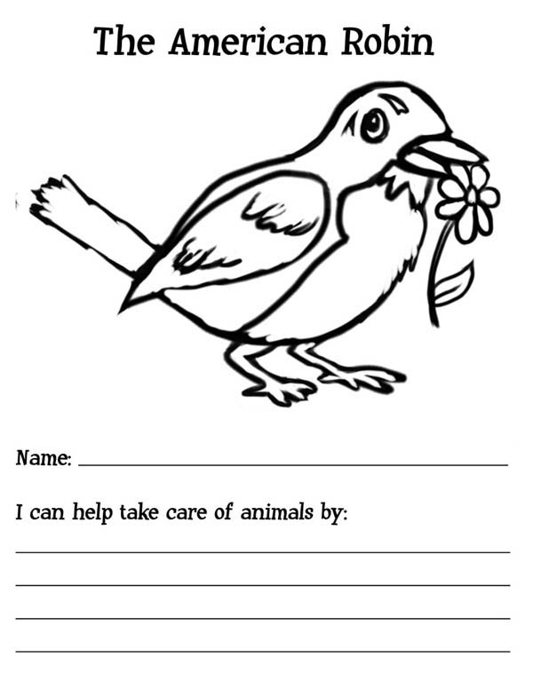 600x776 The American Robin Bird Coloring Page