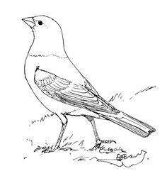 236x272 American Robin Coloring Page Burgess Bird Book Pinterest