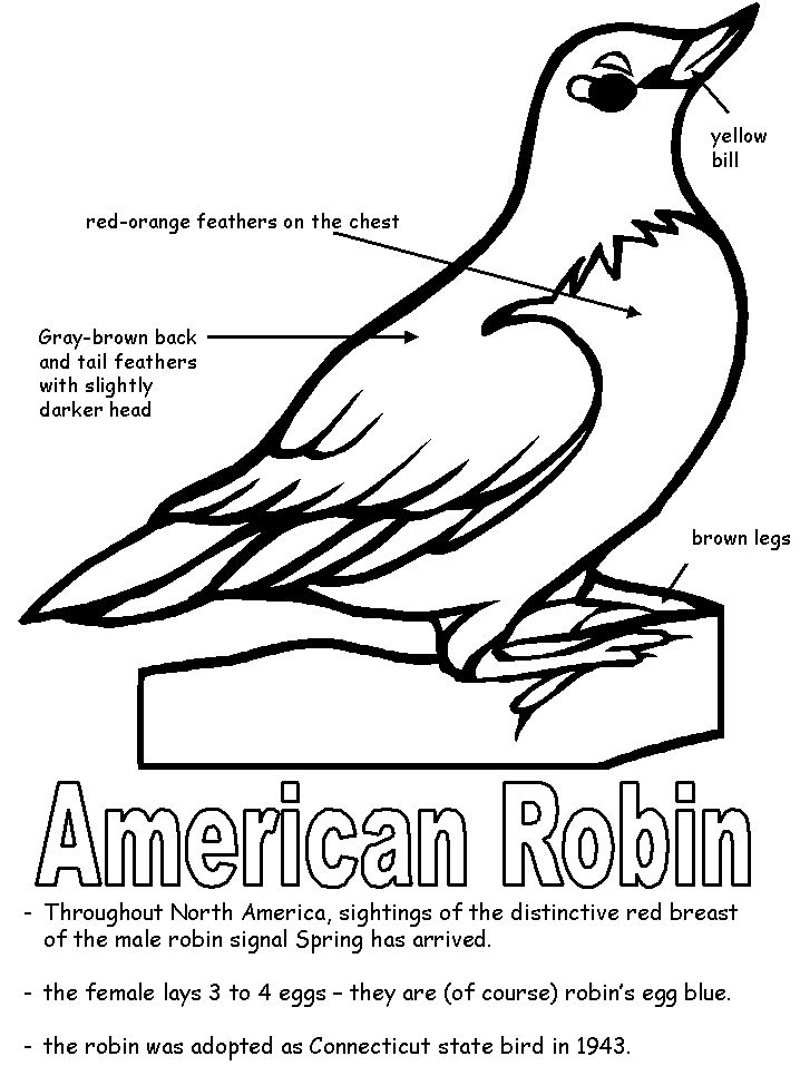 718x957 American Robin Coloring Page Pages Pinterest Robins