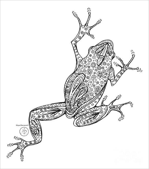 Amphibian Drawing
