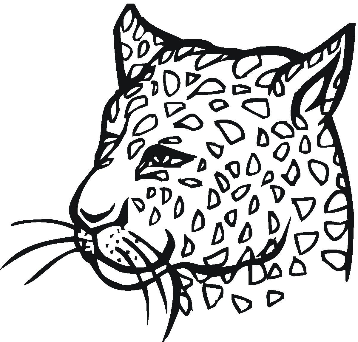 Amur Leopard Drawing At Getdrawings Com Free For Personal Use Amur