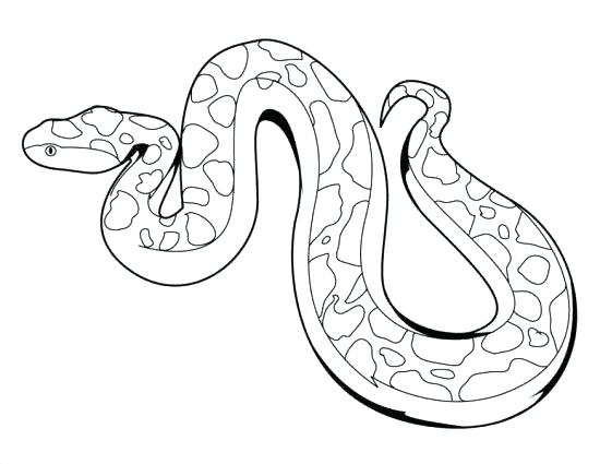 550x425 Boa Constrictor Coloring Page Anaconda Coloring Pages Boa