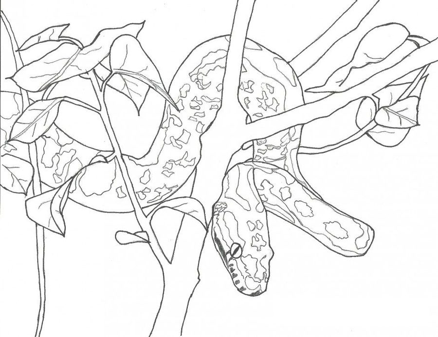 900x692 Coloring Pages Anaconda, Printable For Kids Amp Adults, Free