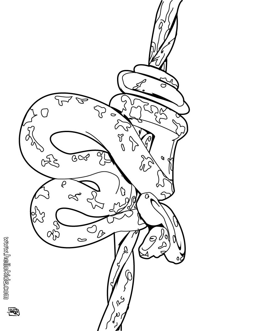 820x1060 Green Anaconda Coloring Page