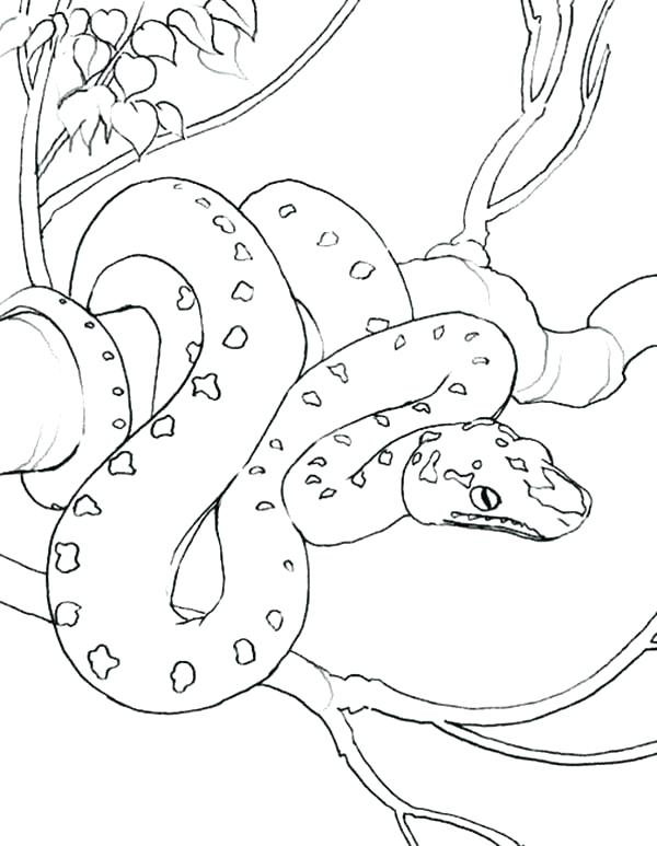 600x773 Anaconda Coloring Page Synthesis.site