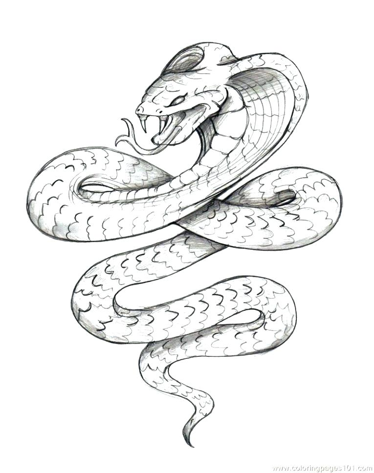 765x969 Anaconda Coloring Pages Click To See Printable Version Of Green
