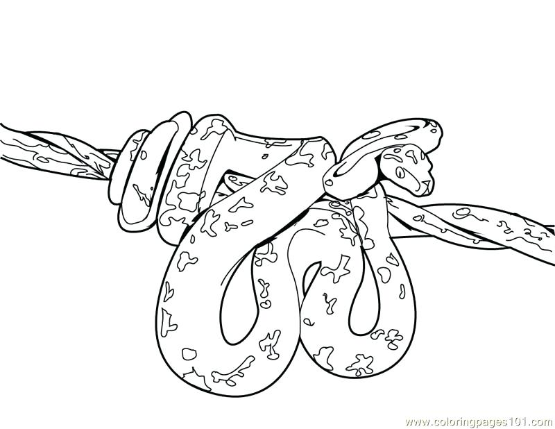 800x618 Anaconda Coloring Pages Coloring Pages Snake Reptile Free
