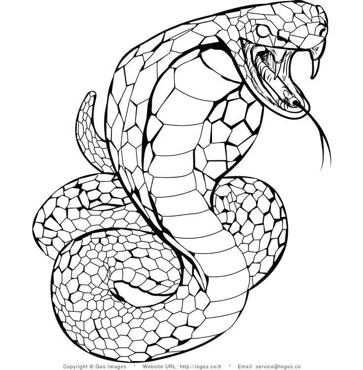 736x750 Coloring Pages Snakes Page Anaconda Snake