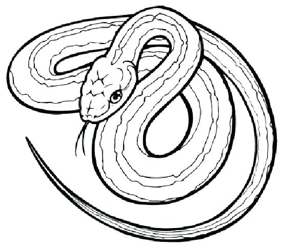 550x482 Snake Coloring Book Plus 33