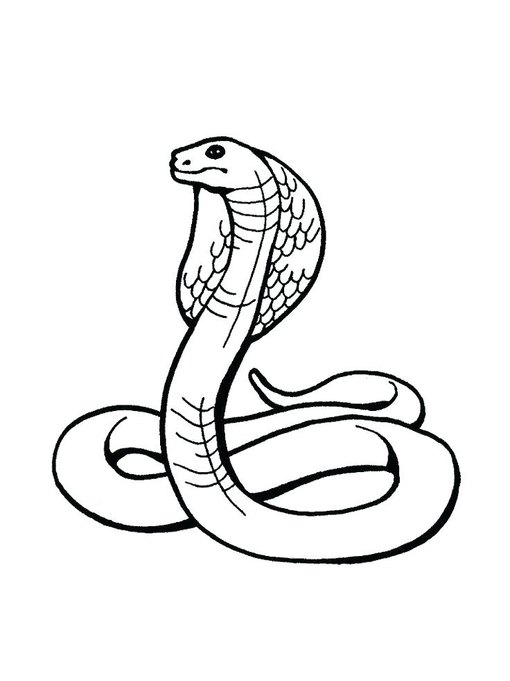736x981 Snake Coloring Pages Learn Letter S For Snake Coloring Page